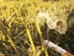 Letalboro (Felipe Castilla Mejía) Tags: naturaleza macro americalatina cn colombia bogota kodak smoke muerte humo tabaco easyshare malboro vicio cigarrillo viernes pseudomacro tabaqueria centronariño felipecastilla pipecmphotography letalboro