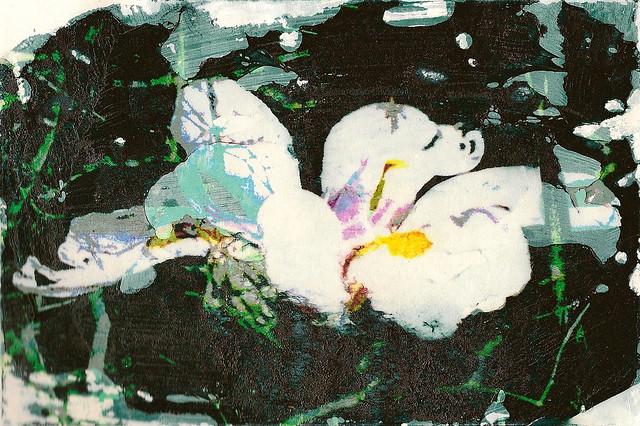 Japanese Iris Transfer by jjldickinson
