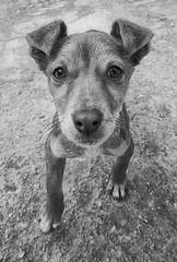 Me llaman cabezn (Leandro MA) Tags: perro 40d ltytr1 leandroma