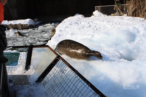 2009北海道-D5-3-旭山動物園_77.jpg