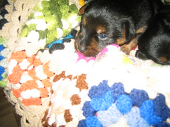 Jazz, (Joey) so cute! Valora and family new baby!