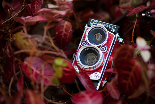 red rollei