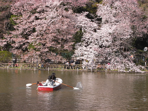 善福寺公園の桜 tokyo sakura 2009