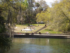 Perfect Picnic Spot at Wekiva