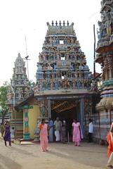 Kali Festival_0071 (drs.sarajevo) Tags: festival hinduism trincomalee kalitemple