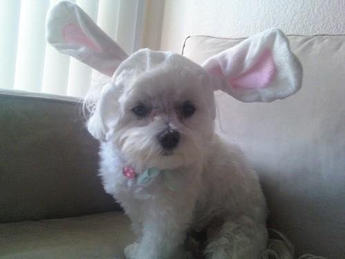 Happy Easter from Ilse