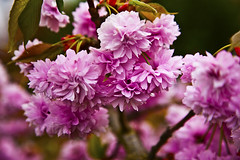 Spring Flowers (s1ngerman) Tags: pink flowers trees easter petals spring flowersplants otw beautysecret flikrestrellas