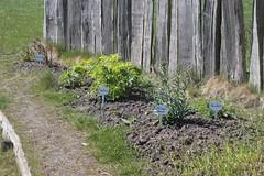 Pflanzen im Garten Haithabu 19-04-2009