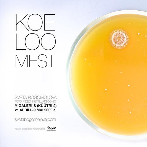 KOELOOMEST - my exhibition in Tartu