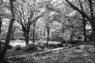 町田樹 画像49
