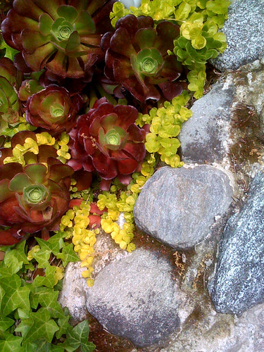 succulent compositionjpg