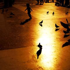 feelin' like a kid (bNat!) Tags: barcelona plaza españa bird birds silhouette contraluz square happy kid spain shadows child d pigeon pigeons bcn abril silhouettes paloma catalonia niña april 23 catalunya backlit palomas silueta nena niño 2009 sombras siluetas cataluña diada nen ombres plaça contrallum colom espanya santjordi plaçacatalunya coloms japi 23dabril abigfave siluetes diadadesantjordi feelinglikeakid viscabarcelona ilovebcn disfrutantcomunnen disfrutandocomounniño totiqueencarafaltaperestardeltotbé estrenonickd aunqueaunfaltaparaestarbiendeltodo althoughstillhavetowaittobecompletellyfine heresmynewnickd quèbéqueshopassenelsnensperseguintcoloms québienqueselopasanlosniñospersiguiendopalomas lovehowkidsenjoychasingpigeons viscabcn