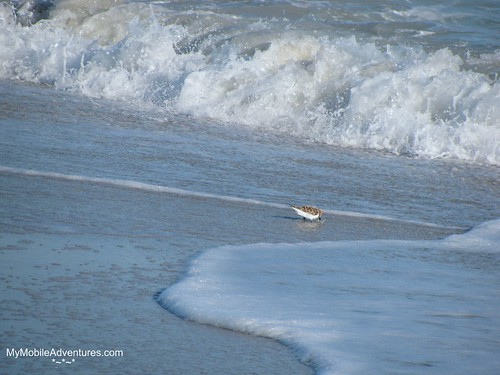 IMG_0536-Sanibel-beach-bird-surf