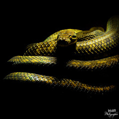 Serpiente (keiza09) Tags: