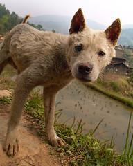 Hello there! (morten almqvist) Tags: china dog guizhou sd14