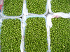 Burnette Farms English Peas