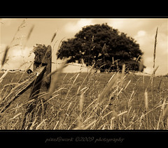 ~~~ natural part of the landscape ~~~ (oliver's | photography) Tags: trees nature photoshop canon germany landscape eos flickr raw image  adobe carpediem copyrighted digitalcameraclub pixelwork canoneos50d flickraward june2009 sigma1770mmf2845dchsm adobephotoshopcs4 panoramafotogrfico pixelwork09photography exquistecapture oliverhoell framephotoscapedigital theacademytreealley allphotoscopyrighted