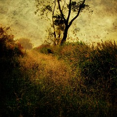 impression (Robb North) Tags: inspiration ontario texture rural retreat monet remote resting really countrylane impressionist claudemonet searching goldenlight t4l magicalley chathamkent thewords happybirthdaycanada swimmingintheether robbnorth arentwhatsinsideofme theyareinsidetheimage monetslight