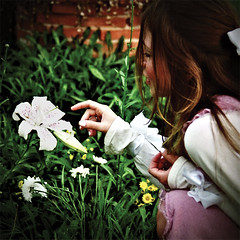 Alice no jardim das flores vivas conversando com o Lírio - Tigre