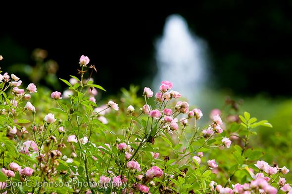 FW Botanic Garden-110