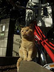 Cats  - Canon EOS 500D / Kiss X3 - (Takanyo) Tags: cute japan digital cat canon eos tokyo kitty   nyo  x3  500d  eos500d   eoskissx3 takanyo  takanyocom