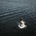 Splash by T. Dog