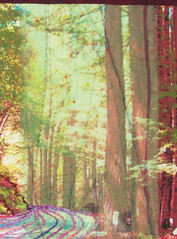 Into the Redwoods-sheer section (jeanneaird) Tags: embroidery artquilt digitalprintingonfabric