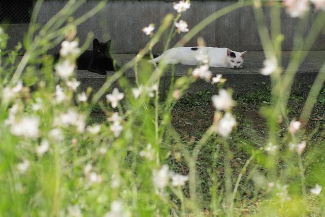 猫写真 cat 1696