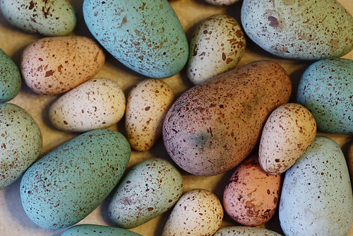 Faux Songbird Eggs