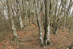 菜畑山の頂の下の登り道