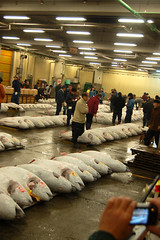 FishMarket_TunaAuction1