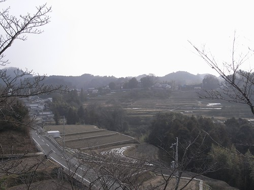 水仙@千早赤阪村-12