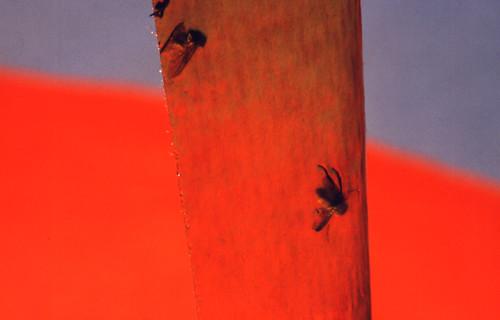 la agonia de las moscas