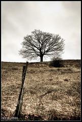 Albero antico (Giorgio Vianini) Tags: cielo aged parma albero pontremoli laspezia passo cisa berceto d700 passodellacisa fotografinewitaliangeneration