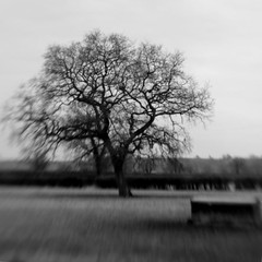 Tree with trough (Adam Clutterbuck) Tags: bw tree field grass lensbaby square mono farm farmland bandw sq oe trough greengage adamclutterbuck blackwhiteblackandwhite sqbw bwsq showinrecentset openedition