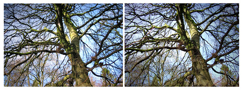 Tree in 3d 05Mar09