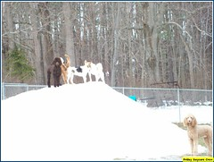Aidan, Buffy, Sonni, Jay, Dougie (Alternative Dog Daycare) Tags: jay doug buffy sonny dogdaycare alternativedogdaycare