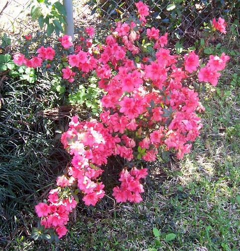 Young shrub