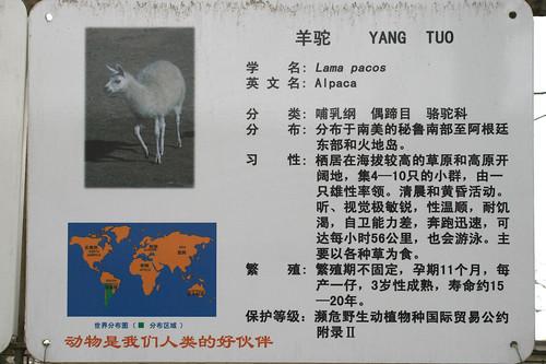 北京动物园的草泥马介绍