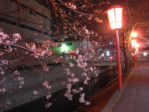 09-03-24【桜】@香芝-01