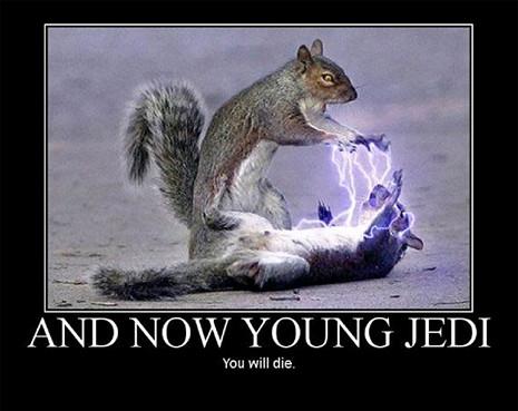 star wars squirrel