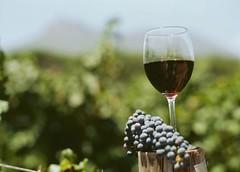 Vini rossi e pesce azzurro: l'alleanza siciliana