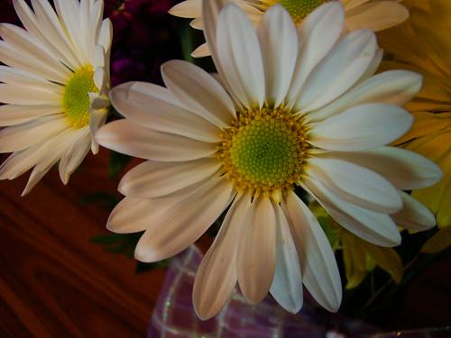 3-21-09 white daisies
