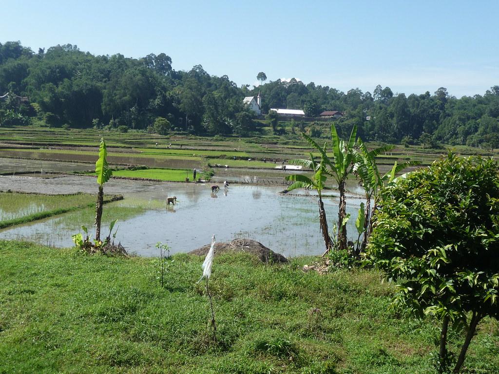 Pays Toraja Visite 3 (14)