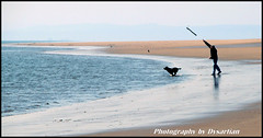 Chasing a Stick is Such Good Fun (Dysartian) Tags: dog beach water scotland fife explore dogwalker kirkcaldy dysart burntisland throwingastick platinumheartaward dysartian burntislandbeach photographybydysartian blueflagawardbeach