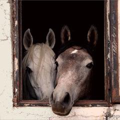 Couple (Osvaldo_Zoom) Tags: portrait horses love window square couple lovers abruzzo casteldisangro happyeaster buonapasqua creativecomments lorononsonosfollati