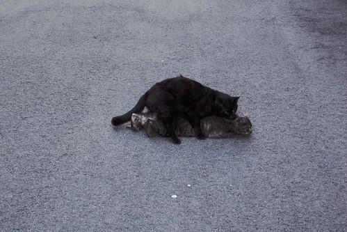 Today's Cat@20090410