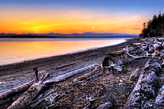 Driftwood Garden (Surrealize) Tags: ocean seattle wood pink trees sunset sea orange mountains reflection beach yellow pine garden washington log nikon rocks colorful branch purple driftwood evergreen westseattle pugetsound brilliant hdr lincolnpark blakeisland olympicmountainrange 9exp d700 surrealize