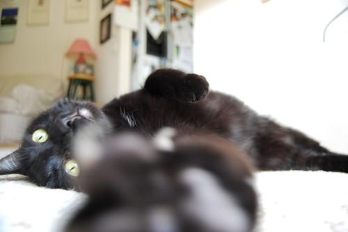 6 - Cat's Paw