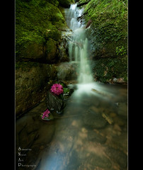 Kelburn Cascades. (Samantha Nicol Art Photography) Tags: park longexposure pink flowers art water pool beautiful scotland waterfall nikon rocks country samantha ayrshire kelburn nicol theunforgettablepictures
